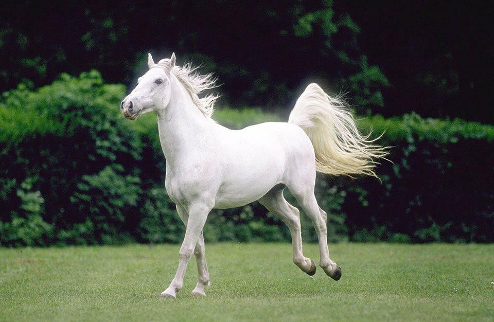 К морю на белом коне