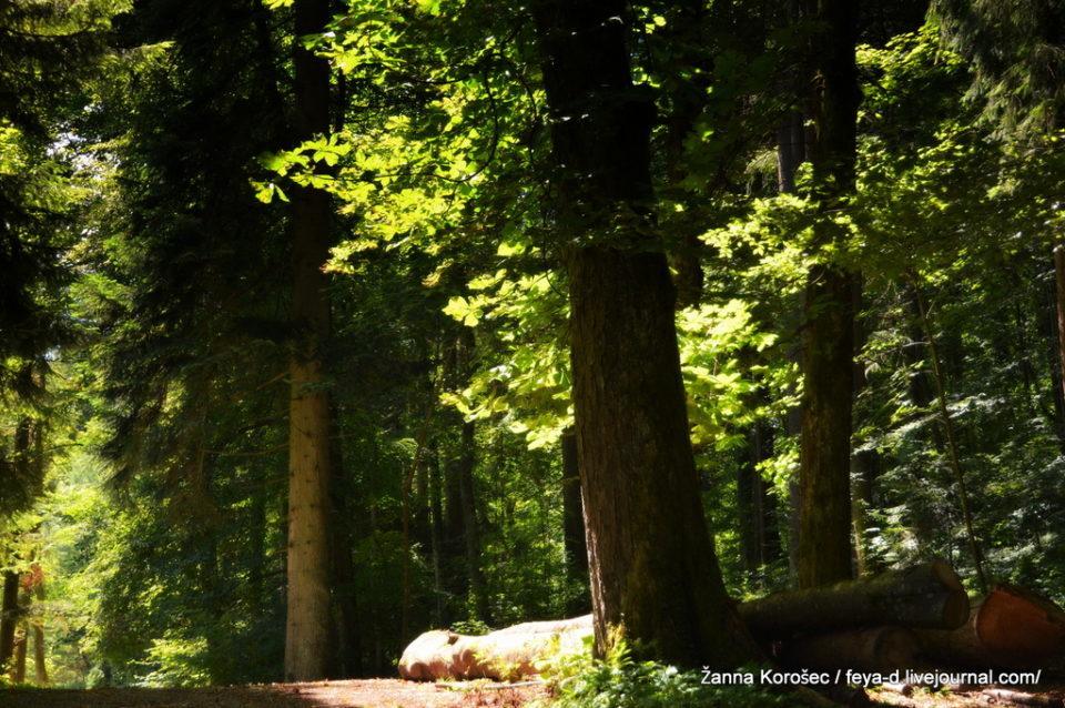 Парк Добрны