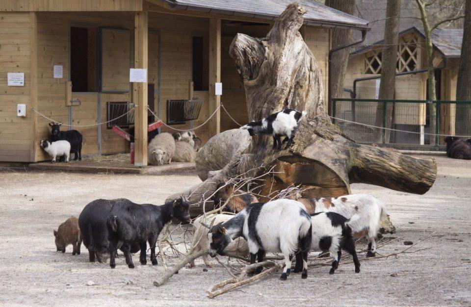 Зоопарк в Любляне
