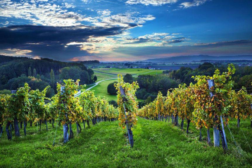 Виноградники Доленьского региона