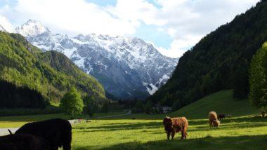 Фантастическая красота Логарской долины