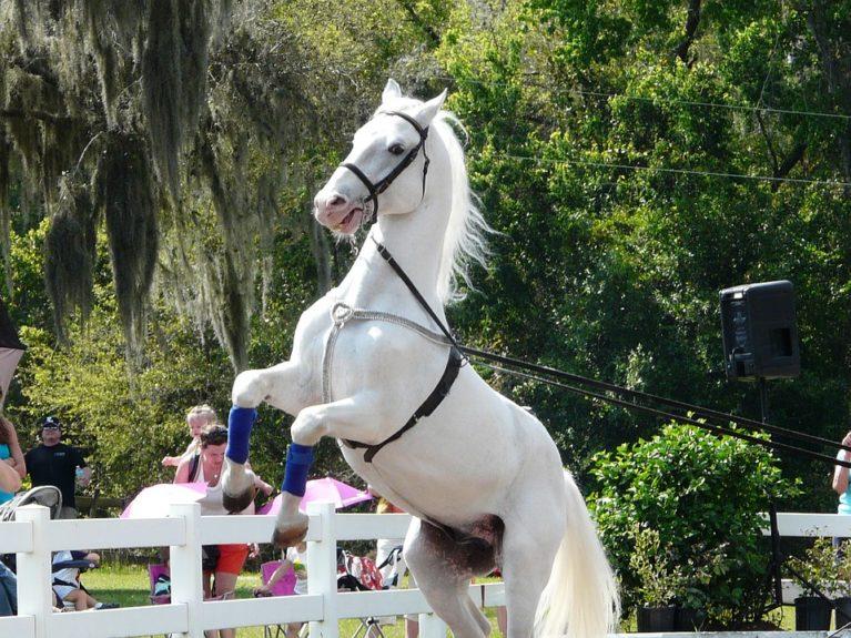 Конь липицианской породы