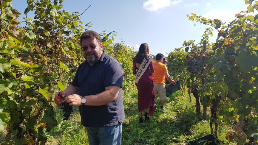 Сбор винограда в Словении