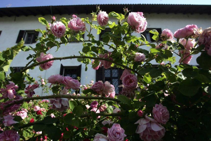 Фестиваль Бурбонских роз на Костаньевице