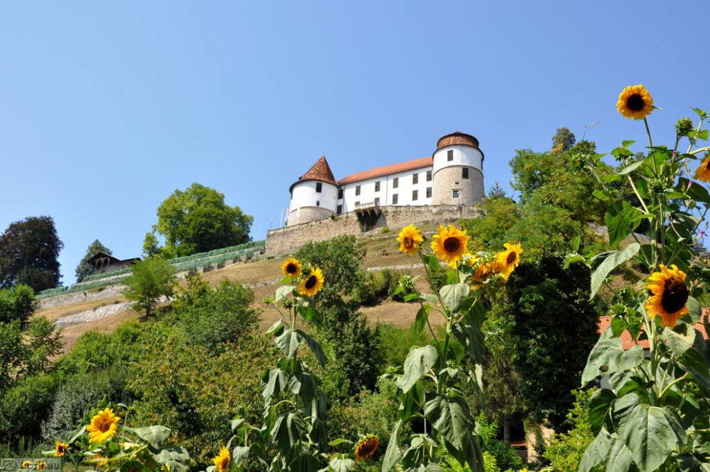 Замок Севница сегодня