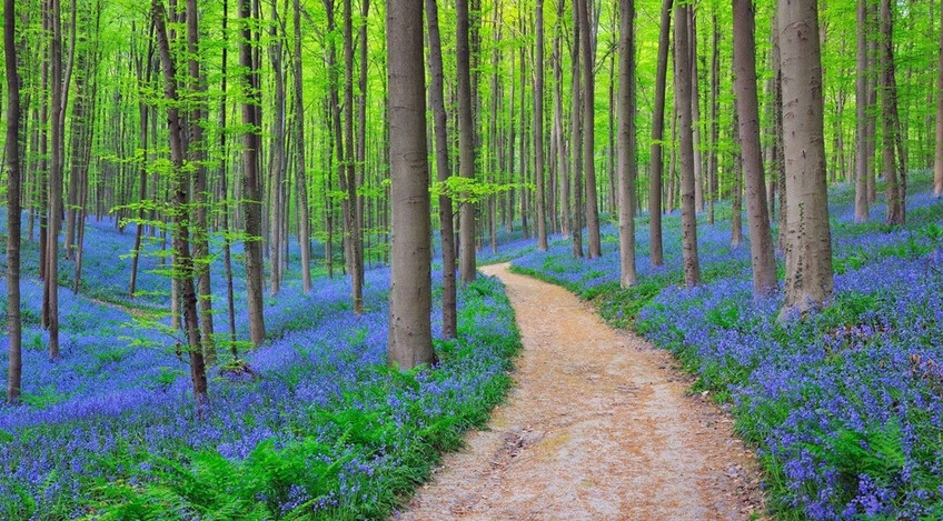 Весенний лес в Словении