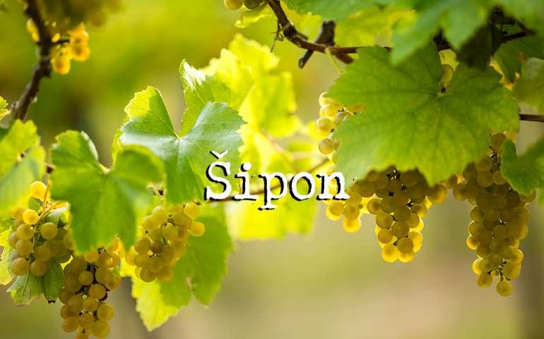 Вино Шипон