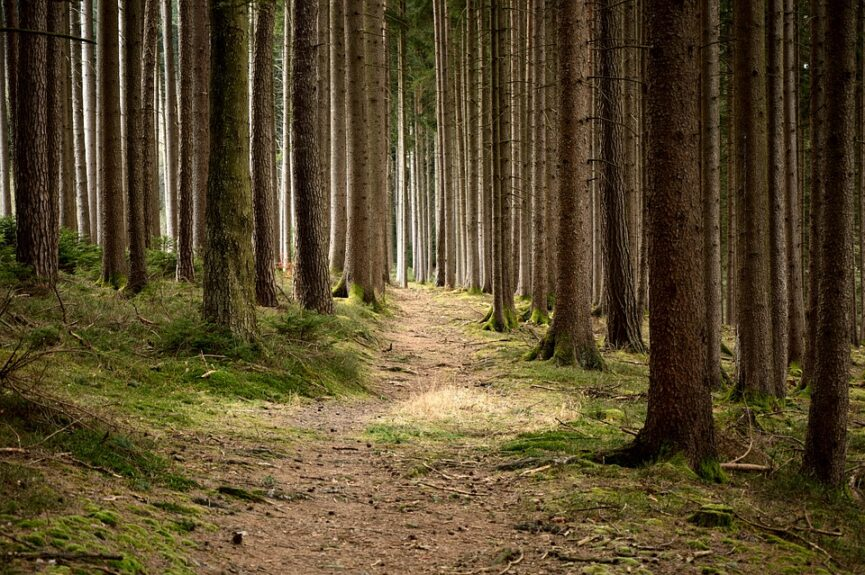Леса в Похорье