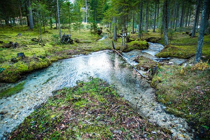 Исток ручья Езерница