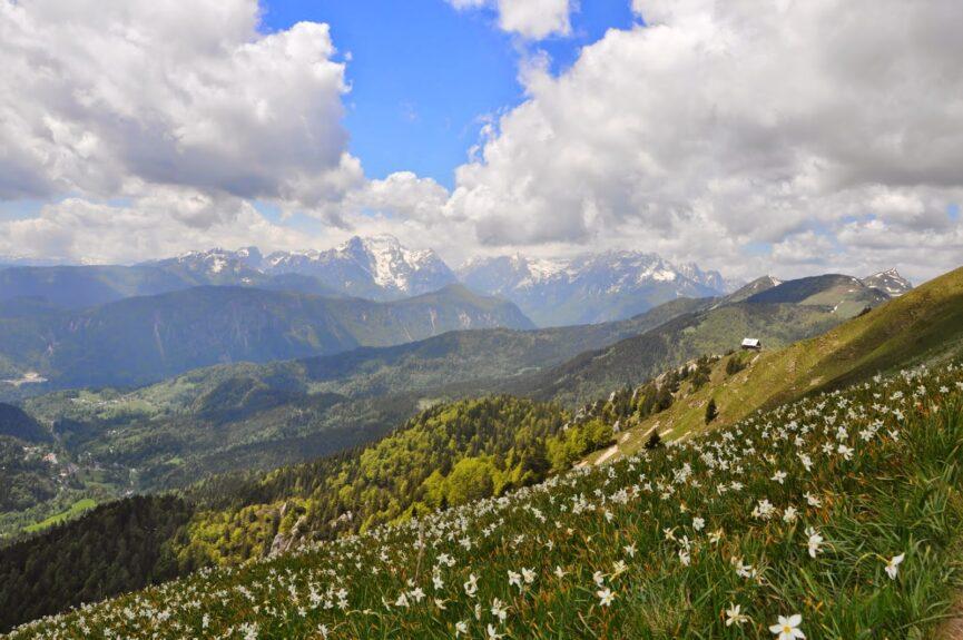 Голица, вид на Юлийские Альпы