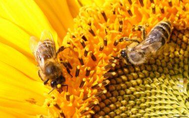 Всемирный день пчел в Словении