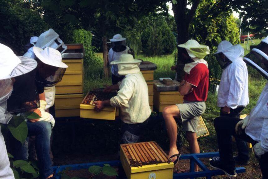 Курсы пчеловодства в Словении