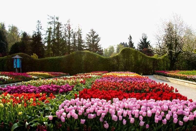 Тюльпаны в арборетуме Волчий Поток