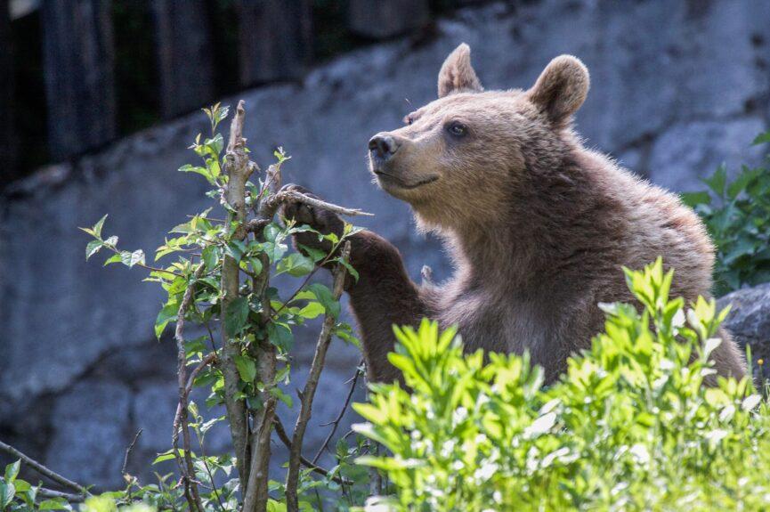 Медведи в зоопарке Любляны