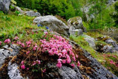 Альпийский ботанический сад Юлиана