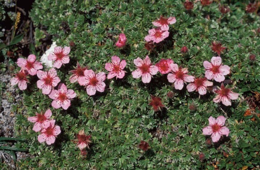 Цветы в ботаническом парке Юлиана